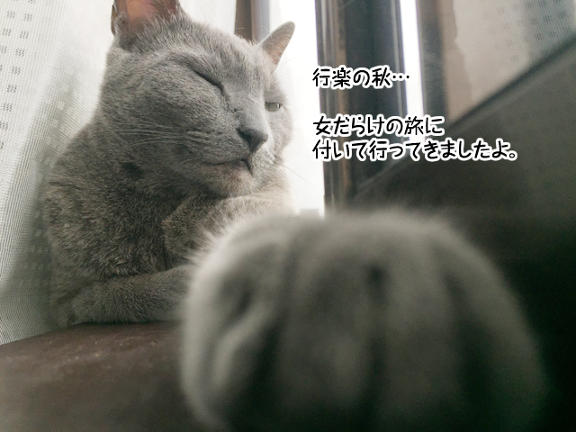 f:id:mama-mamico:20171017160526j:plain