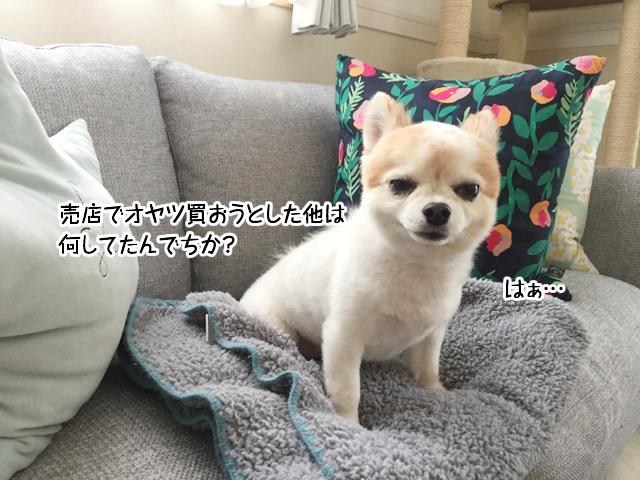 f:id:mama-mamico:20180409165611j:plain