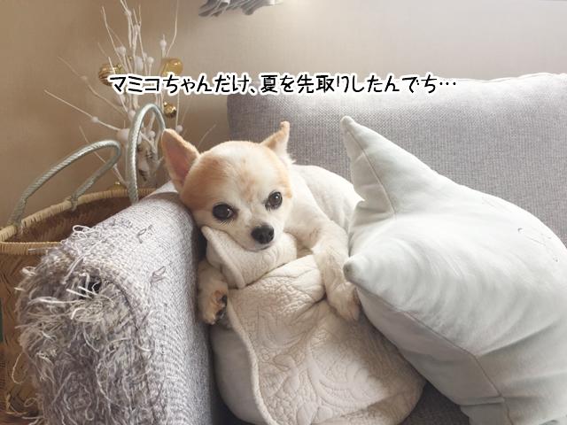 f:id:mama-mamico:20180615160432j:plain